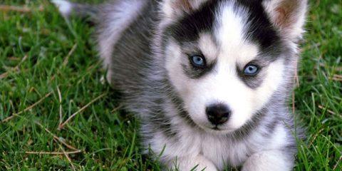 puppyy11