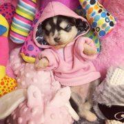 puppyp1