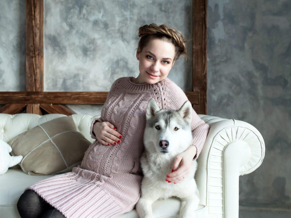 Resultado de imagen para dogs husky, When you are Pregnancy