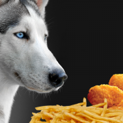 ' ' from the web at 'https://siberianhusky.com/wp-content/uploads/2017/11/HuskyFastFood-180x180.png'