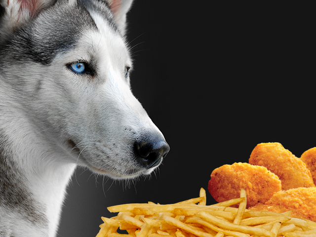 Foods That Are Good For Dogs Eyes